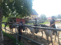 Łomnica 26.07-05.08.2018r.: undefined